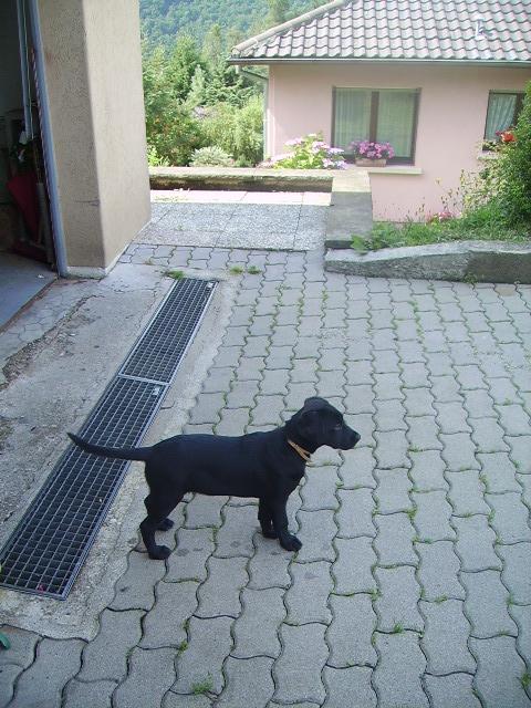 éna, née le 15 04 2009 20810