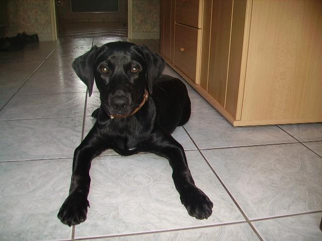 éna, née le 15 04 2009 27810