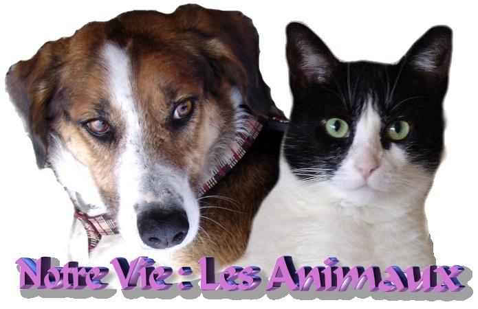 Notre Vie : Les Animaux