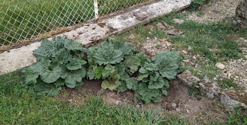Mon jardin 93914710