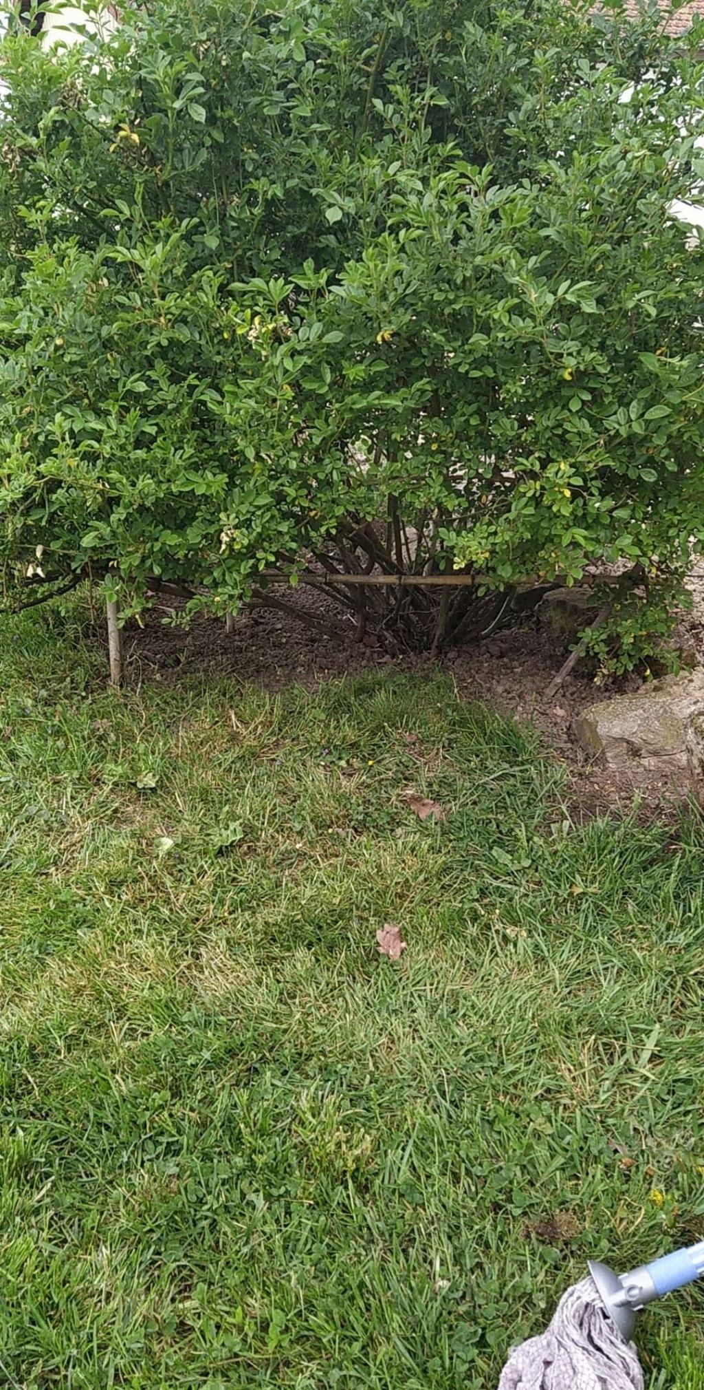 Mon jardin 94030410