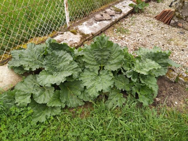 Mon jardin 94429910