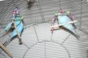 JEUX et LIEUX FAVORIS de nos oiseaux Img_0510