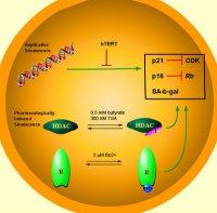 Proteina 21 N1116410