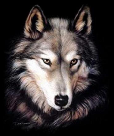 Les loups...... Prb0x610
