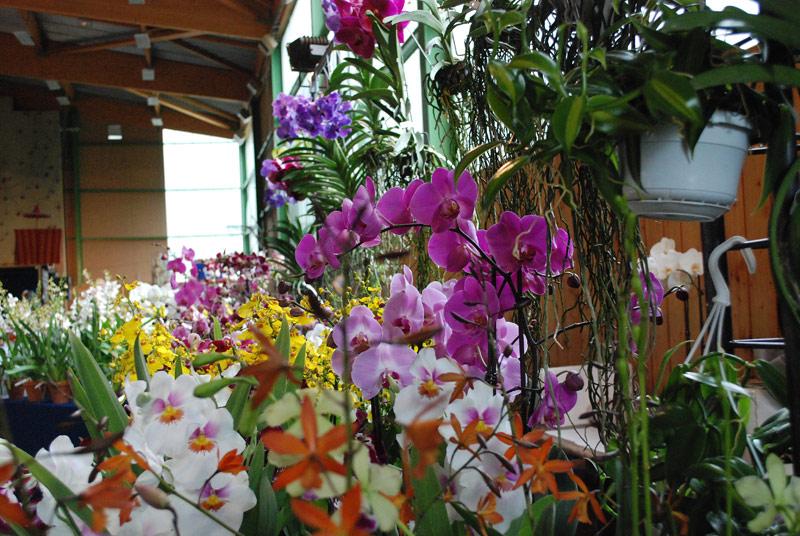 Le topic unique en photos de la Saint-Hip'aux cactus 2010 11-06-14