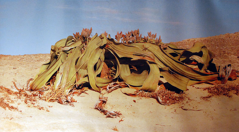Le topic unique en photos de la Saint-Hip'aux cactus 2010 13-06-25