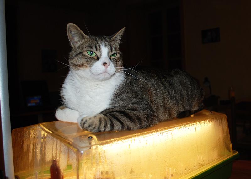 Mon chat Astro le beau 710