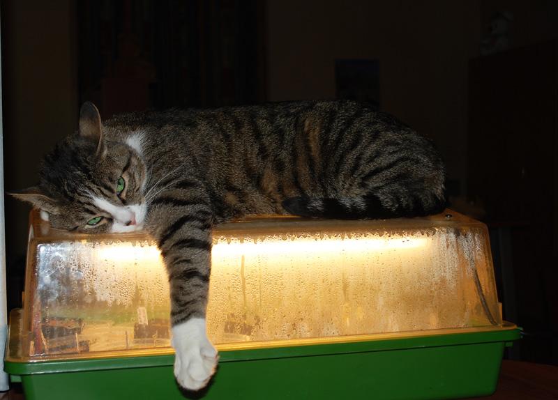 Mon chat Astro le beau 810