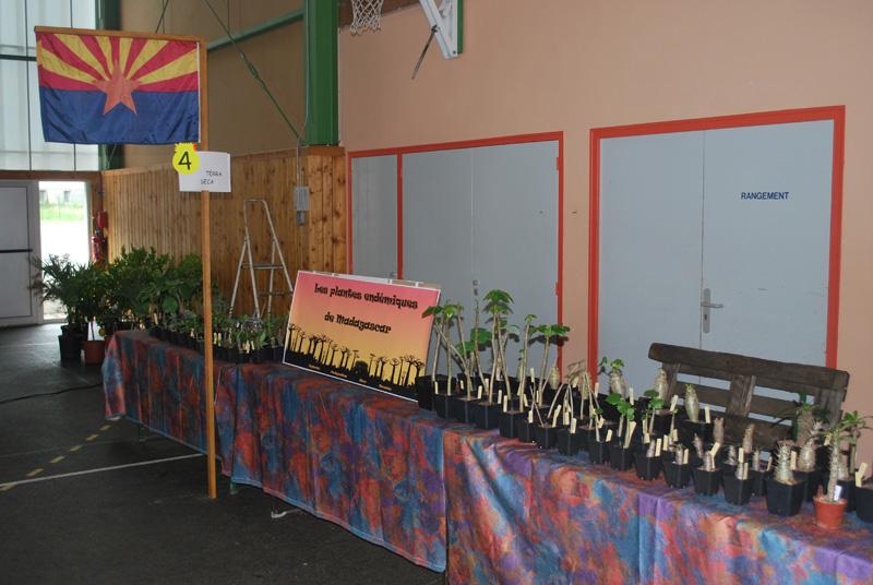 Le topic unique en photos de la Saint-Hip'aux cactus 2010 Dsc_0231
