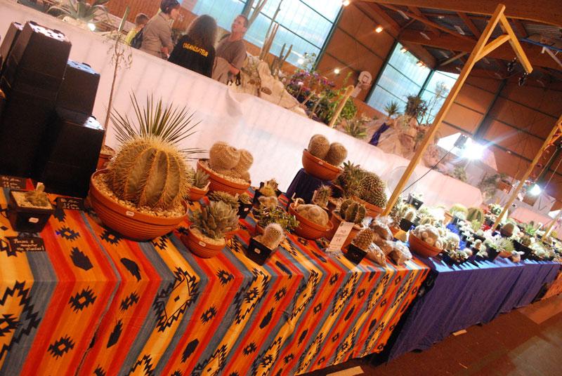 Le topic unique en photos de la Saint-Hip'aux cactus 2010 Edf410