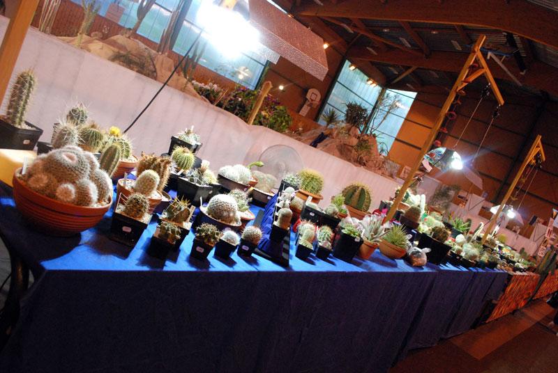 Le topic unique en photos de la Saint-Hip'aux cactus 2010 Edf510