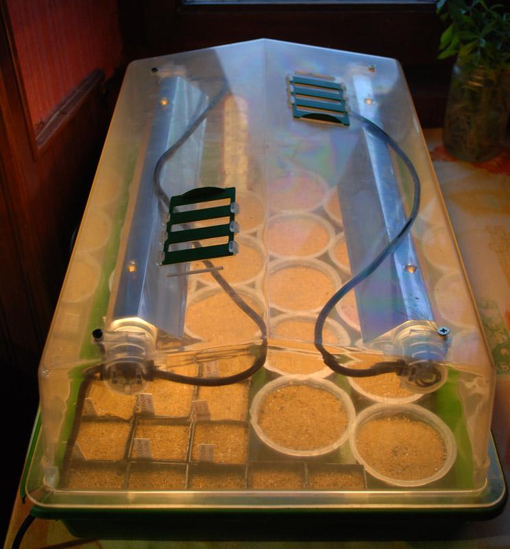 Semis de cactus du 18 février 2010 Semis-17