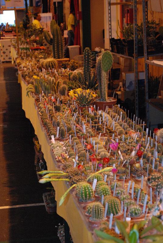 Le topic unique en photos de la Saint-Hip'aux cactus 2010 Uhlig210