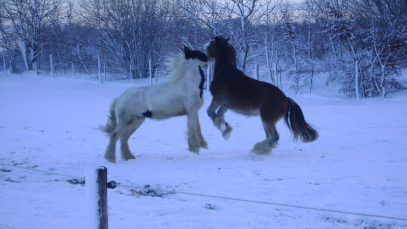 Les joies de la neige, et les glissades par la même occasion Fin_d_10
