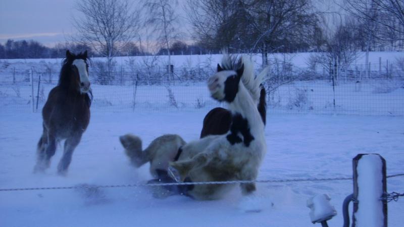 Les joies de la neige, et les glissades par la même occasion Fin_d_11