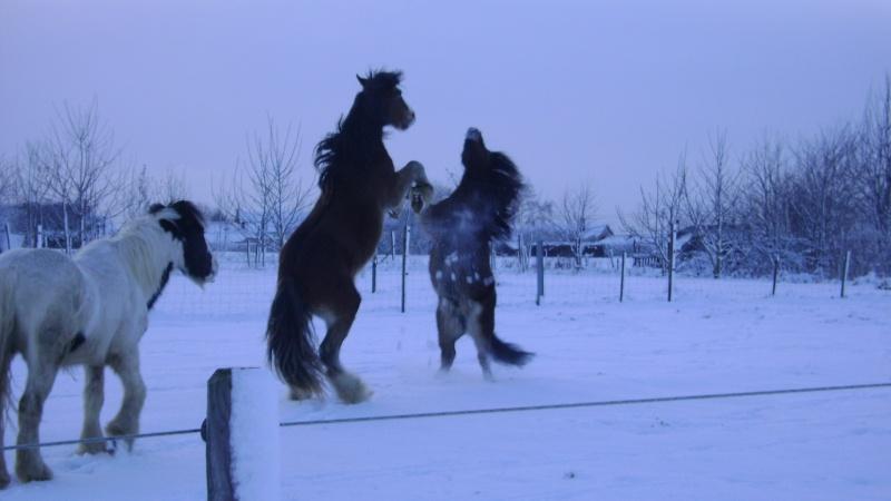 Les joies de la neige, et les glissades par la même occasion Fin_d_12