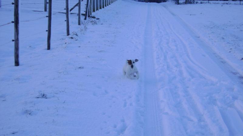 Les joies de la neige, et les glissades par la même occasion Fin_d_13