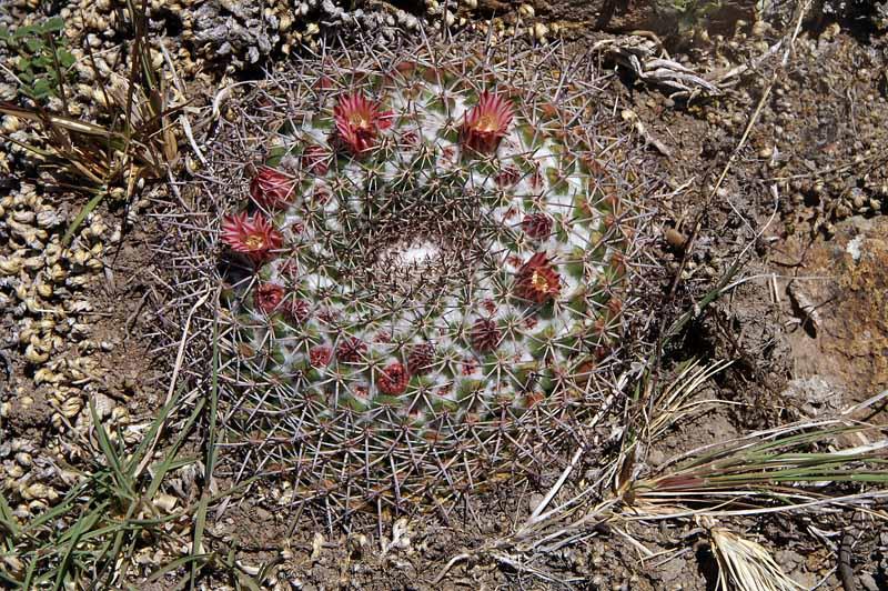 Mexican trip - part 3 Pict1021