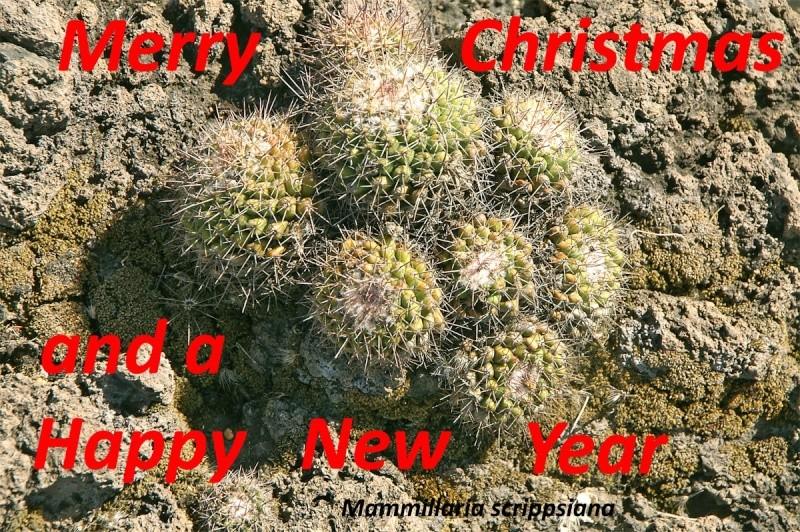 Christmas 2010 Xmas-210