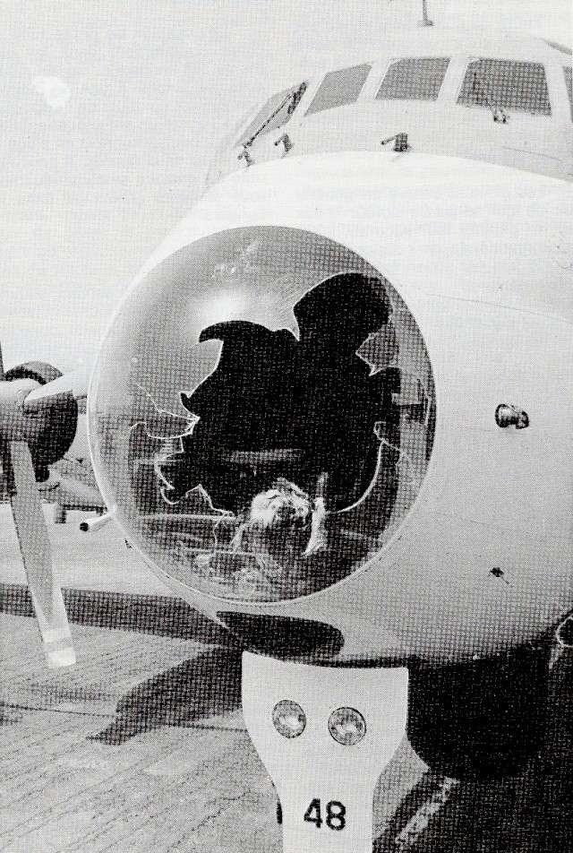 [Aéro Divers] Breguet Atlantic-ATL 1 - Page 2 Atl_co10