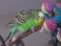 JEUX et LIEUX FAVORIS de nos oiseaux Img_0315