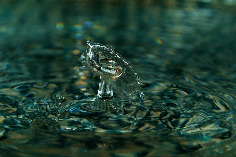 FIL ROUGE: Quelques gouttes d'eau pour un océan  - Page 15 Img11010
