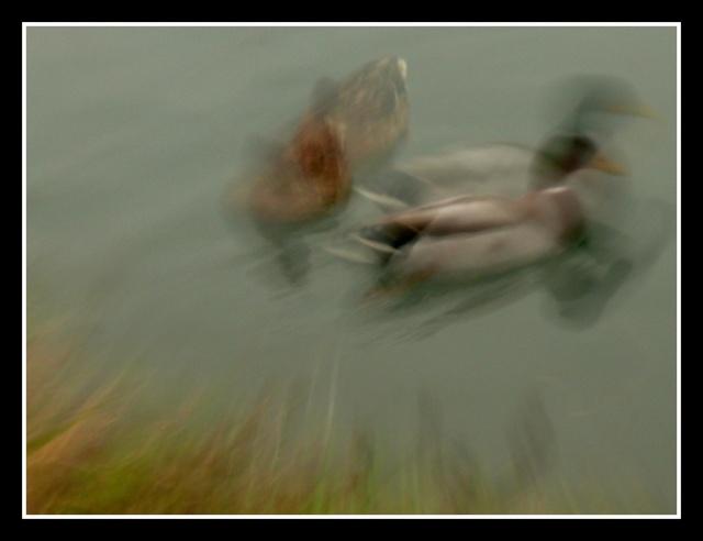 divers flous Fractu13