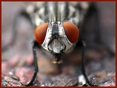 Les mouches Semain10