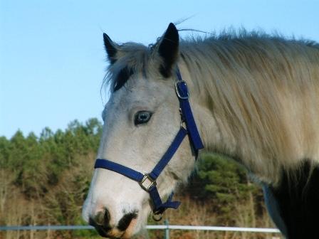 Le pie-noir aux yeux bleus Dscf0027