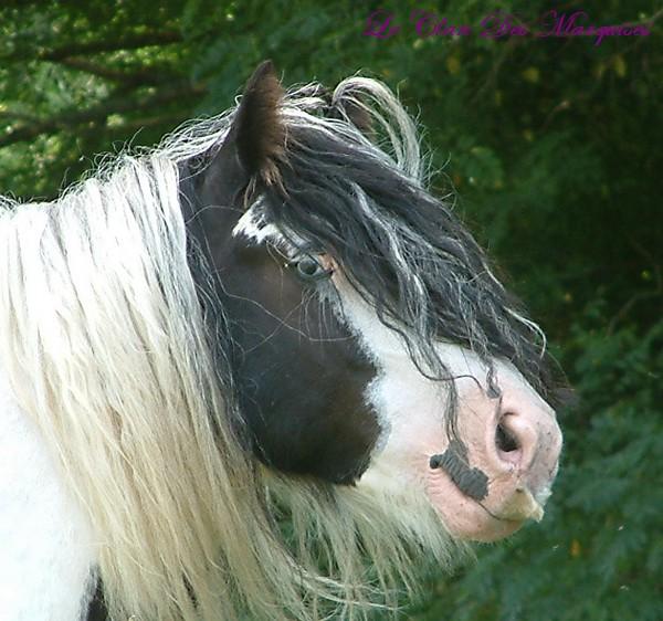 Le pie-noir aux yeux bleus Dscf0116