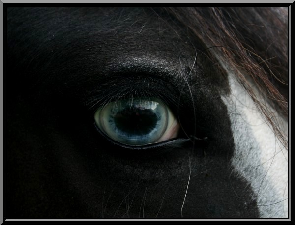 Le pie-noir aux yeux bleus Img_1118
