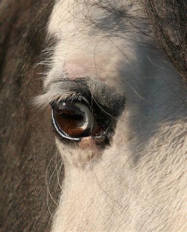 Le pie-noir aux yeux bleus Img_8610