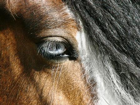 Le pie-noir aux yeux bleus P1110410