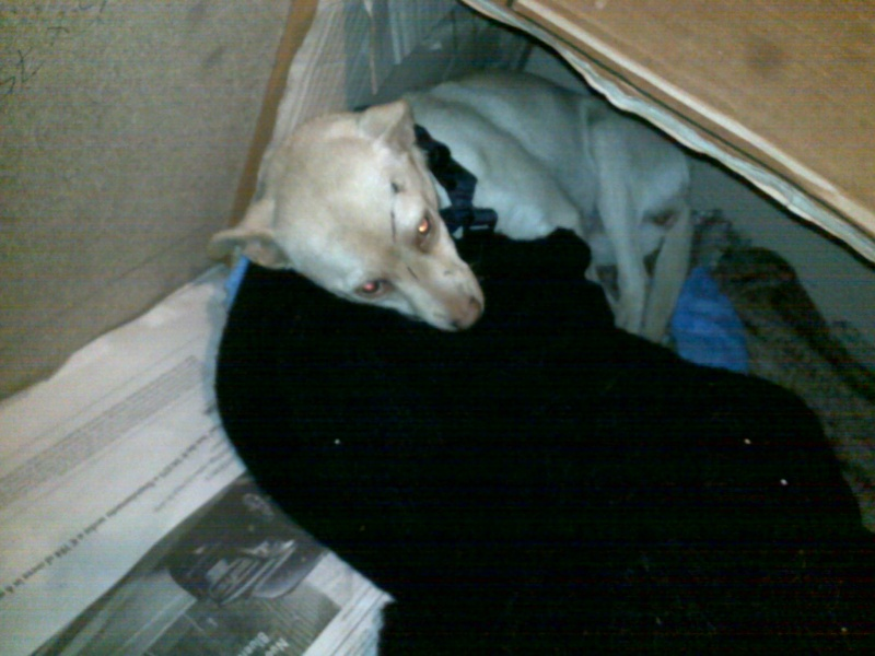 Ecco jolly che cerca casa..... 04122010