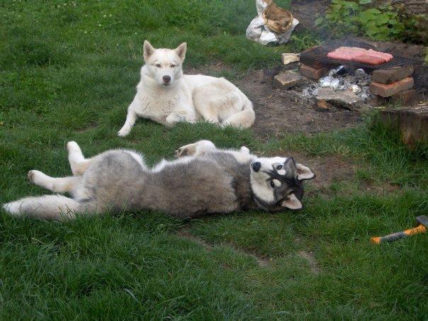 """Concours de la photo de chiens la plus """"belle"""" 4181_117"""
