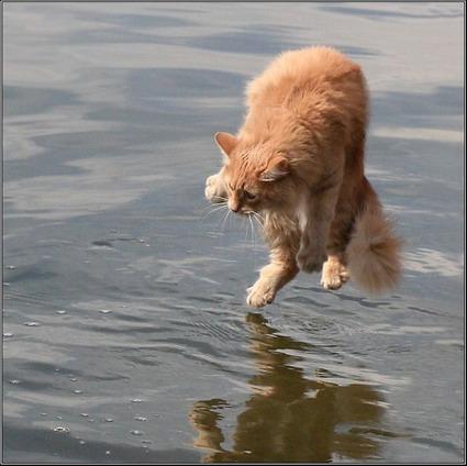 Funny pics Cat_on10