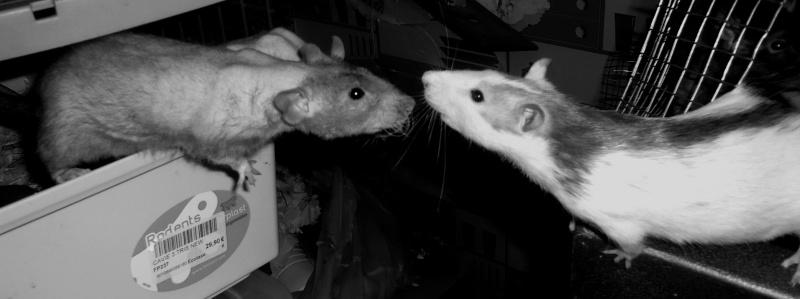 Les 3 Petits de MEZ Lilas et Achille P1060913