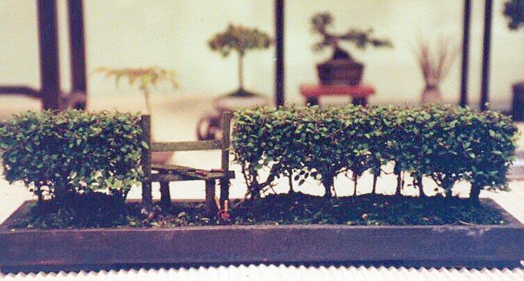 Bonsai Maze Hedge_10