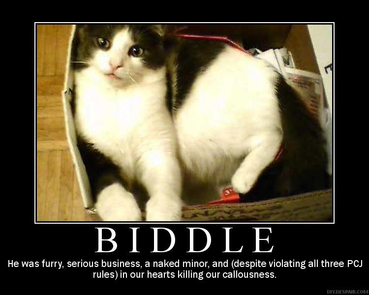 My cat Biddle Biddle10