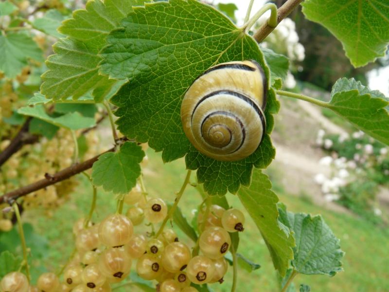 Escargot 14_jui13