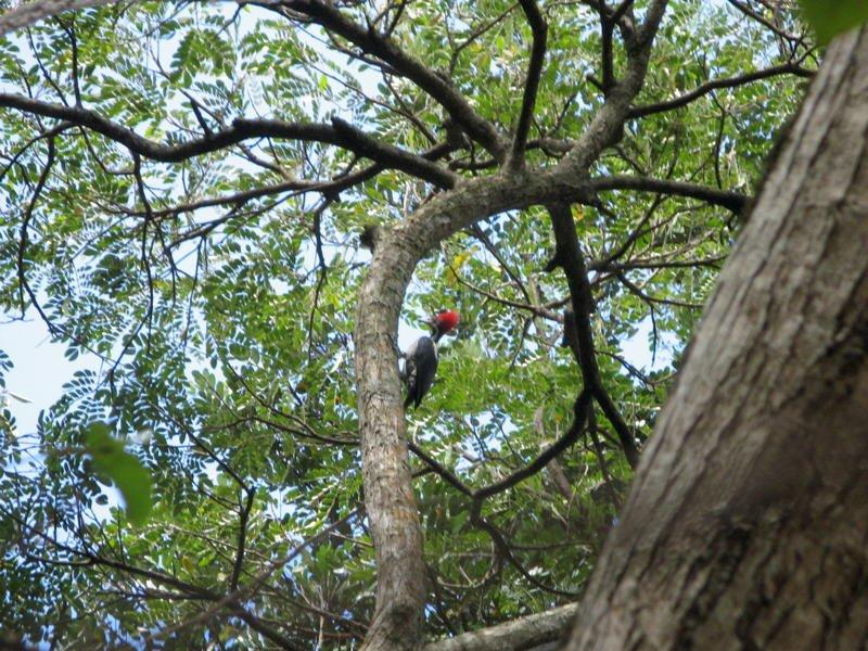 Oiseau De ma Kia Lorette La Gran Sabana Venezuela Carpin10