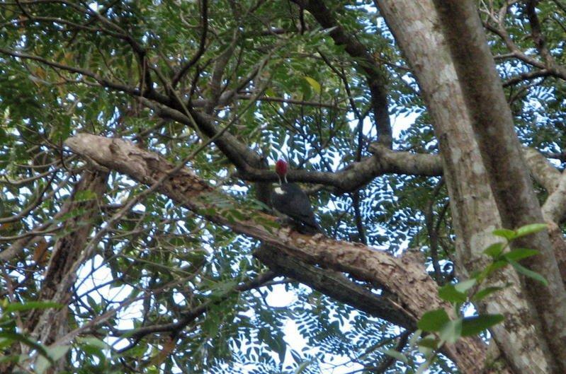 Oiseau De ma Kia Lorette La Gran Sabana Venezuela Carpin11