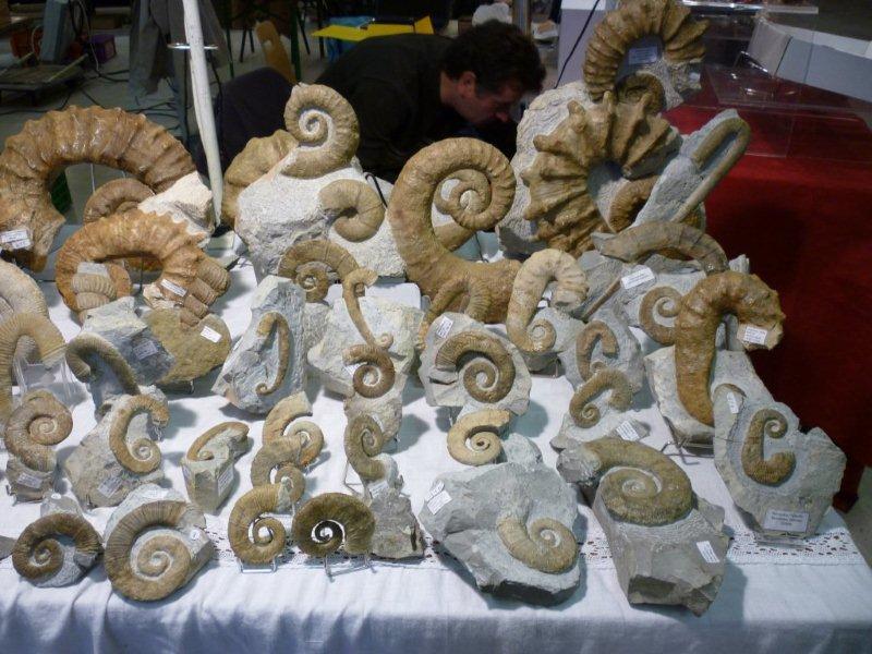 Exposition à Guiherand-Granges Expo_623