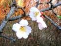 Le printemps Futrs-11