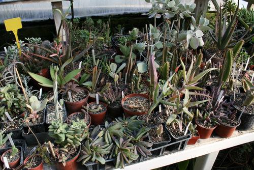 vous avez dit succulentes !!! Papini41