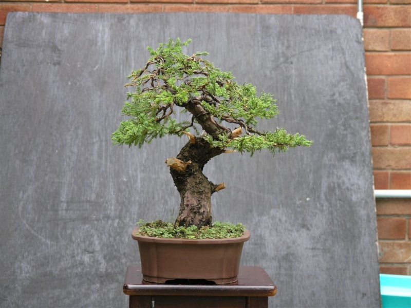 San jose juniper P9080310