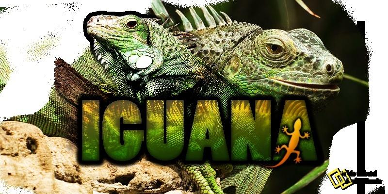 .:Mundo Reptil:.