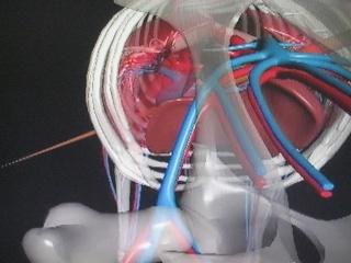 Anatomie du gibier ! Thai_012