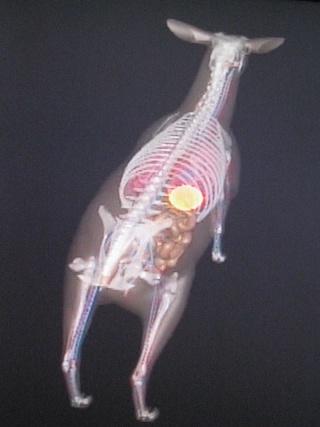 Anatomie du gibier ! Thai_019